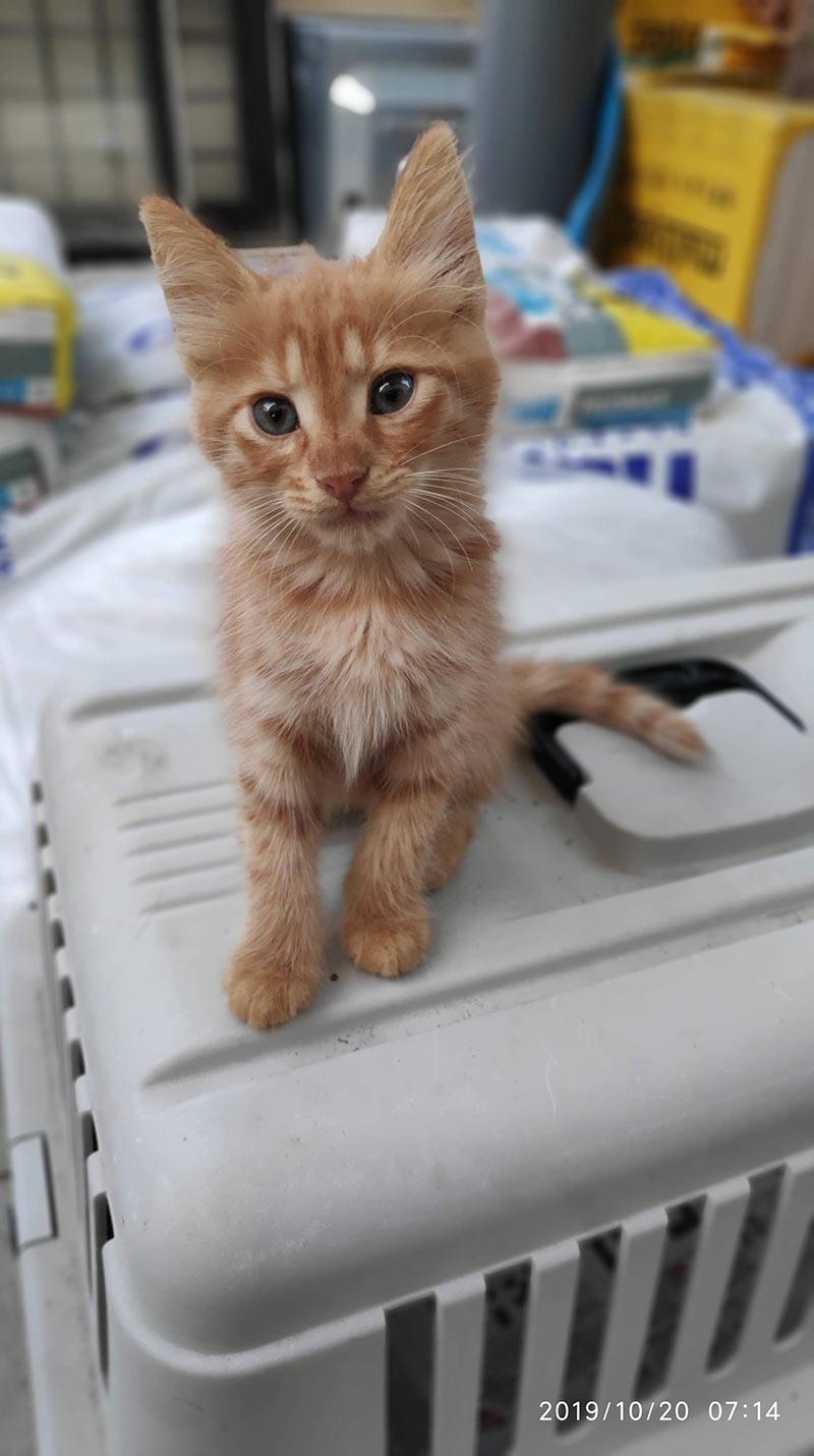 Adoption von Katzen